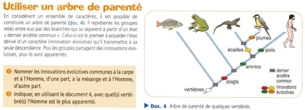 arbre de parente.jpg: imagesbiogeolfxm.free.fr/phylogenese/original/arbre de parente.html